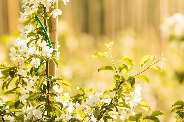 Äppelträdgård